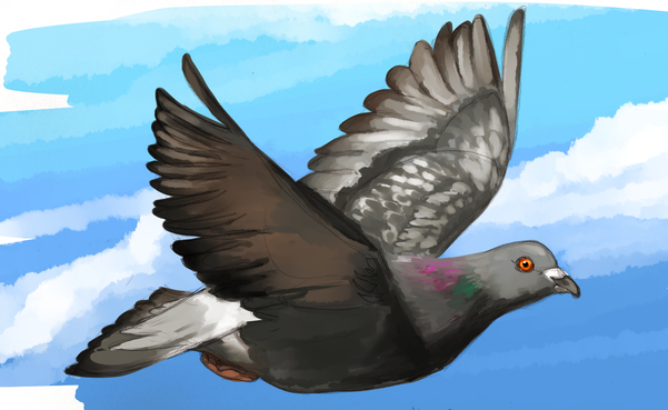 Pigeon Image 1.png