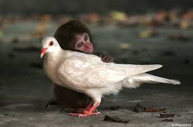 Love for Animals and Birds Pics 1